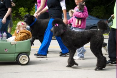 green bay pet walk
