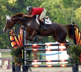 Julio at jumping show